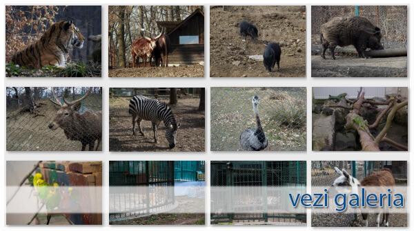 Gradina Zoologica Sibiu - Galerie Foto