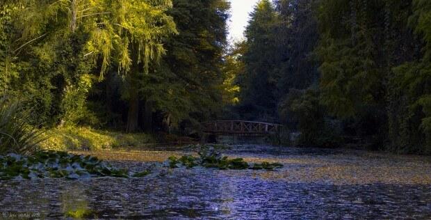 Arboretumul Simeria